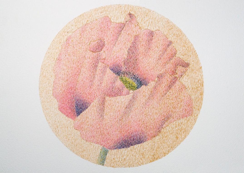 Petite fleur de pavot